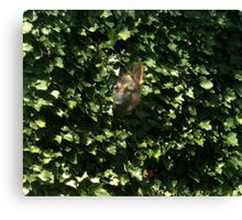 Hiding In The Brush Canvas Print