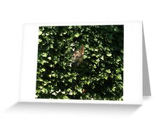 Hiding In The Brush Greeting Card