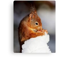 Red Squirrel with nut in snow Canvas Print