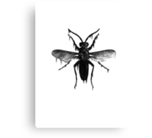 Melted insect Canvas Print