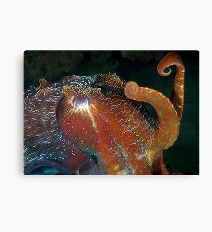 Cuttlefish 2 Canvas Print