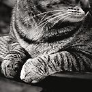 _ just my paws _ by Louise LeGresley
