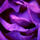 Purple Rose by NicoleConrau