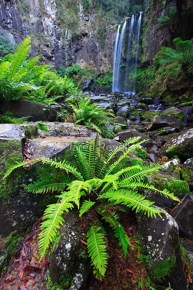 Fern & Falls by Jared Revell