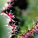 Spikey Leaf by NicoleConrau