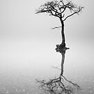 Lone Tree in the Mist by Grant Glendinning