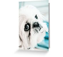 Shih Tzu Boy Greeting Card