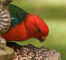 King Parrot by Claire  Farley