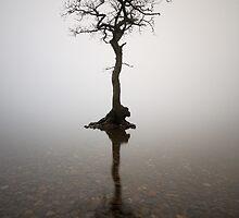 The Loch Lomond Tree by Grant Glendinning