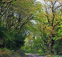 Green is back..........Lyme Dorset UK by lynn carter