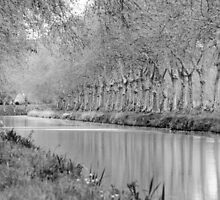 The canal du Midi in spring, Roubia France by Paul Pasco
