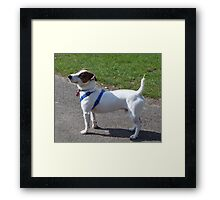 Adorable Fox Terrier Smooth Coat Framed Print