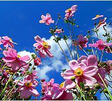"""Flower Power"" Photographic Print"