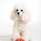 Doggie love by Cristina Rossi