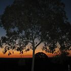 Tree Sunset by CarmenDavies
