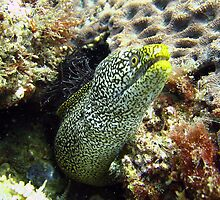 Moray Moment by Miguel Garrido