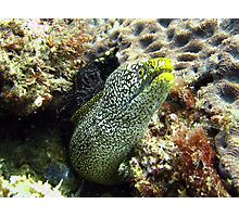 Moray Moment Photographic Print
