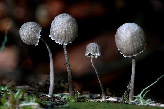 Fungi Season 24 by Normf