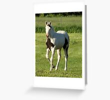 Playful Filly! Greeting Card