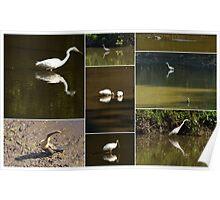6 mile cypress :Florida  Environmental Collage  Poster