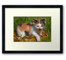 cat pet Framed Print