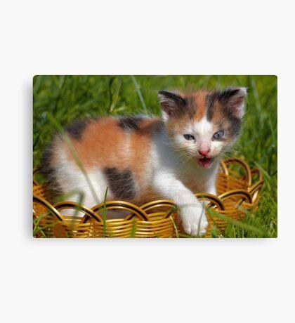 cat pet Canvas Print
