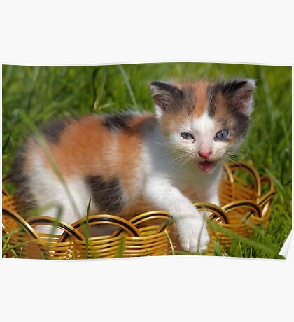 cat pet Poster
