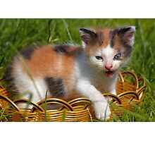 cat pet Photographic Print