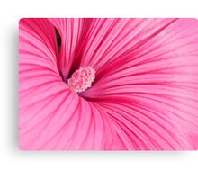 Candy Pink Canvas Print