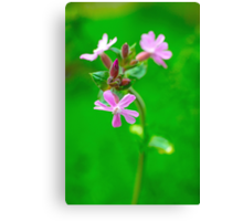 The Campion  Canvas Print