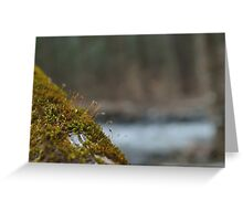 Moss Grows Here Greeting Card
