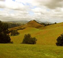Sentinal of Sunol Valley, Flag Hill, Sunol Regional Wilderness, CA 2015 by J.D. Grubb