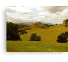 Sentinal of Sunol Valley, Flag Hill, Sunol Regional Wilderness, CA 2015 Canvas Print