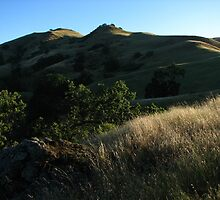 Morning Light, Sky Camp, Sunol Regional Wilderness, CA 2015 by J.D. Grubb