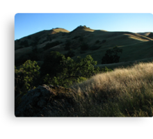 Morning Light, Sky Camp, Sunol Regional Wilderness, CA 2015 Canvas Print