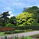 The Garden in London by Nira Dabush
