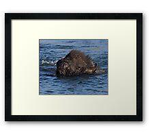 Bison Crossing Framed Print