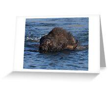 Bison Crossing Greeting Card