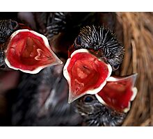 Hatched & Hungry Photographic Print