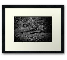 Garden Dream BW Framed Print