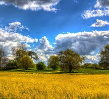The Springtime Farm by DavidHornchurch