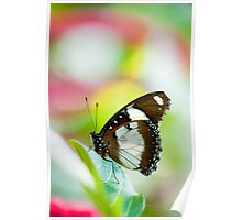 orchard swallowtail butterfly Poster