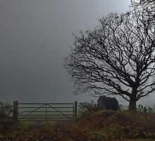 Gate and Tree in the Morning Mist by relayer51