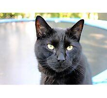 closeup of black cat Photographic Print