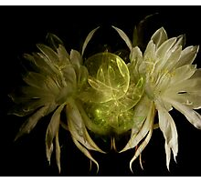 Glowing Moon Flowers Photographic Print