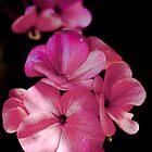 flower power by frank Yule