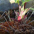 Moss flowers by Robert Burton