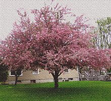 Visual Texture Crab Apple Tree by Linda Miller Gesualdo