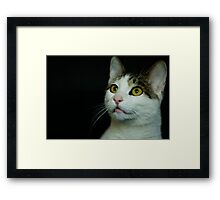what's that? Framed Print