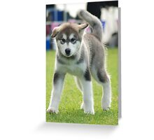 Smart Boy Greeting Card